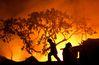 [사진] 比 마닐라 슬럼가 화재로 1000가구 피해 : 뉴스zum